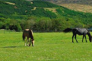 Horses grazing at Tomacharich