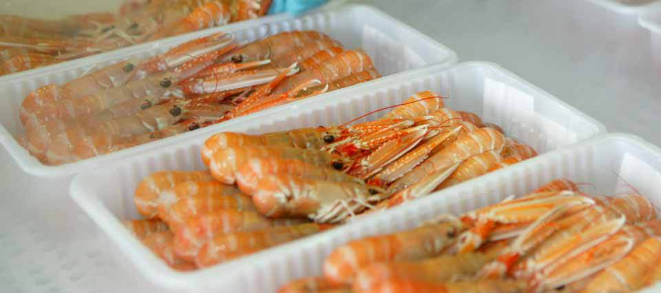 Supplier Shrimp Mail: Mail Order Food Producers In Fort William