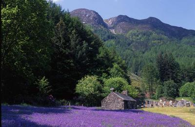 Bluebells and the Cottage