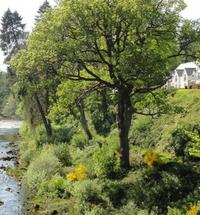Around half an hour from Fort William and perfect for exploring Skye and the Isles, Loch Ness and the Great Glen, our apartments at River Court are...