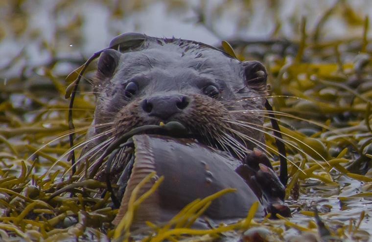 Medium large otter 2 1